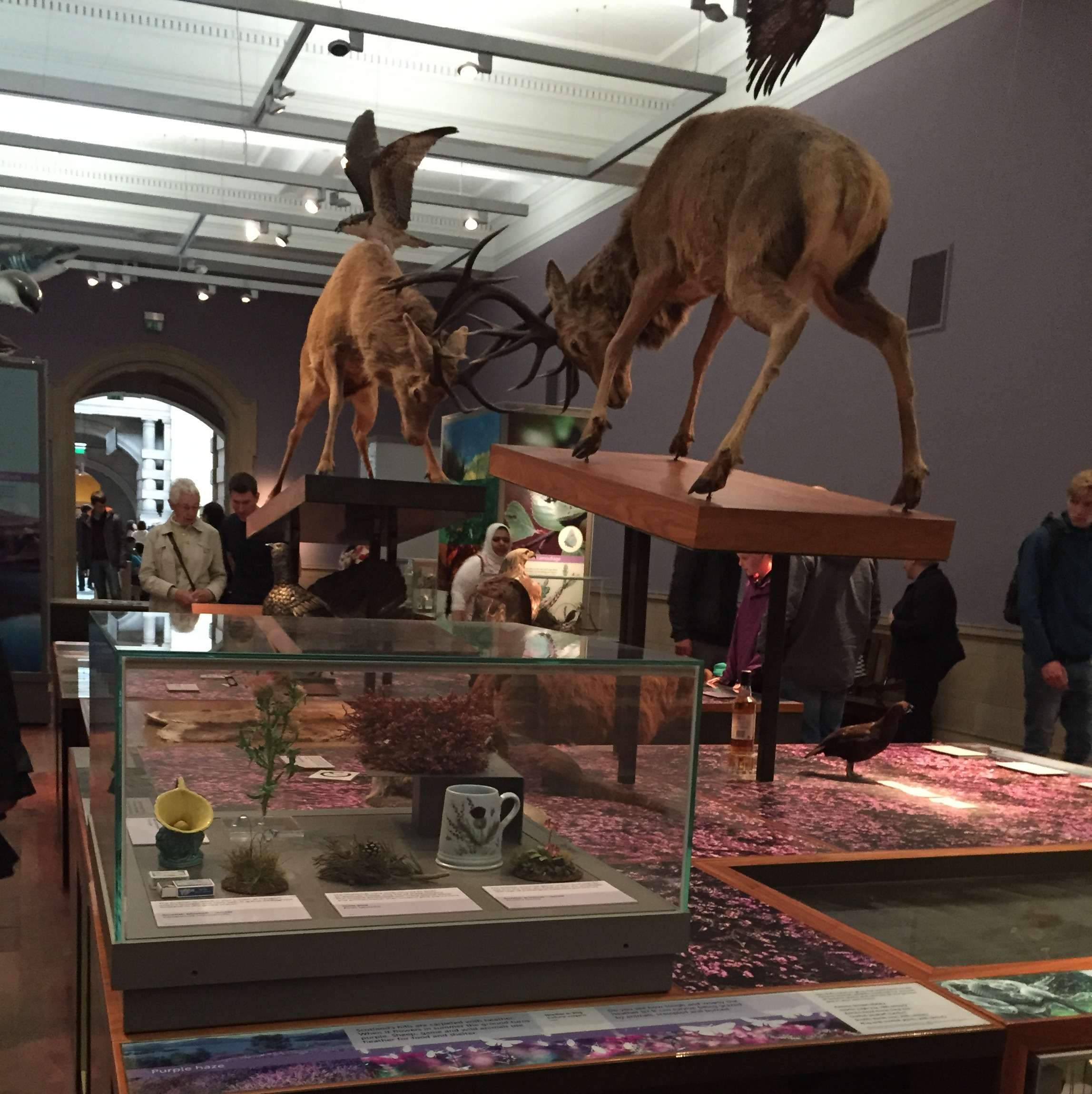 Figure 1: The center of the Scottish Wildlife exhibit, at the Kelvingrove Museum and Art Gallery in Glasgow. Photo by author.
