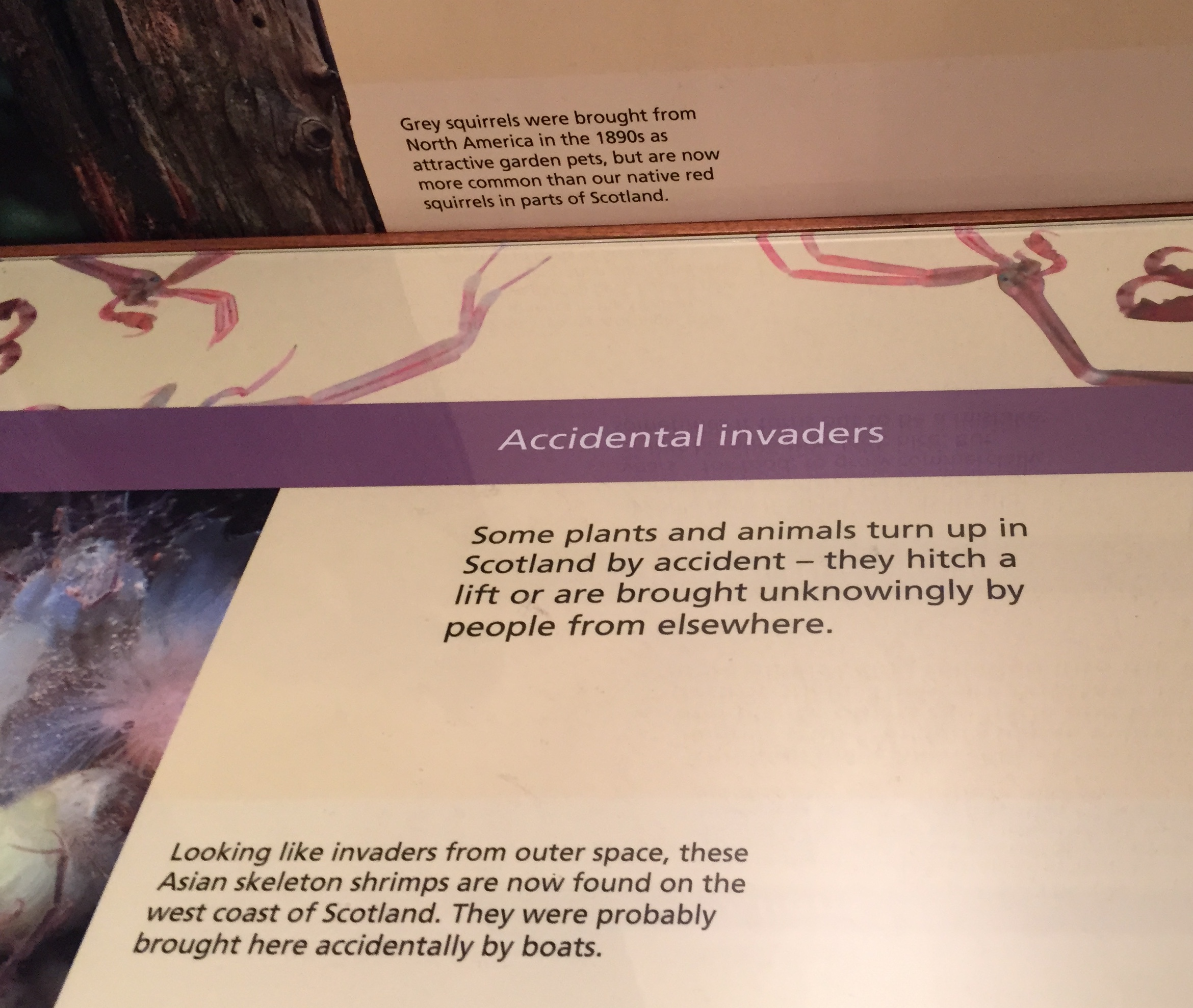 """Figure 4: A label of """"Accidental Invaders"""" in Kelvingrove Museum and Art Gallery in Glasgow. Photo by author."""